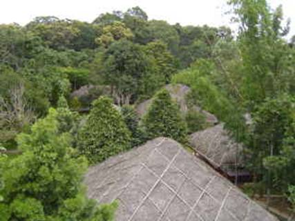 Elephant grass roofs at Spice Village